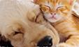 Gossos i gats